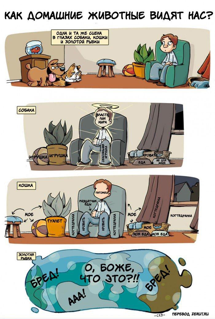 Как домашние животные видят нас