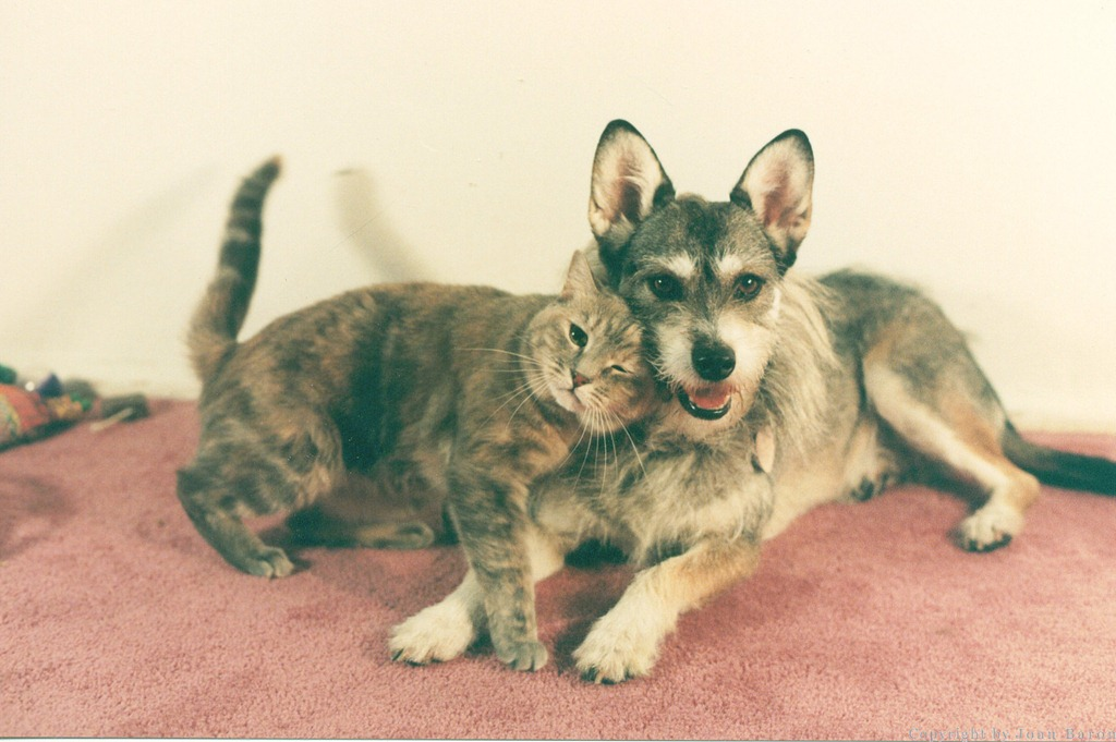 Собака Джинни, кошка года