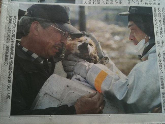Собака и ее хозяин снова вместе после цунами в Японии