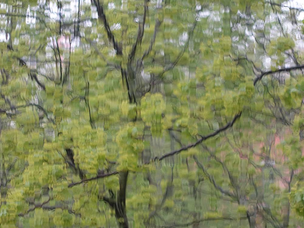 Майский ливень-2.jpg