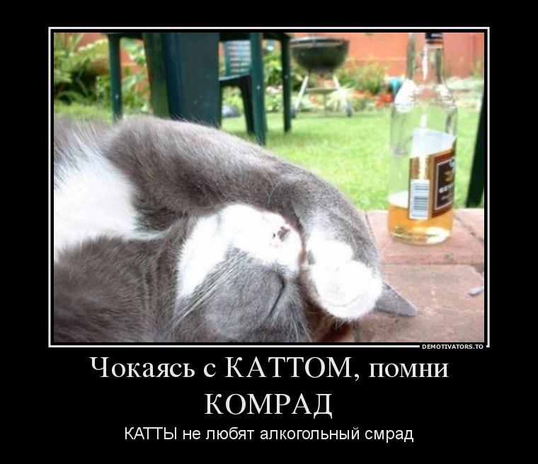 767130_chokayas-s-kattom-pomni-komrad_demotivators_ru[1]