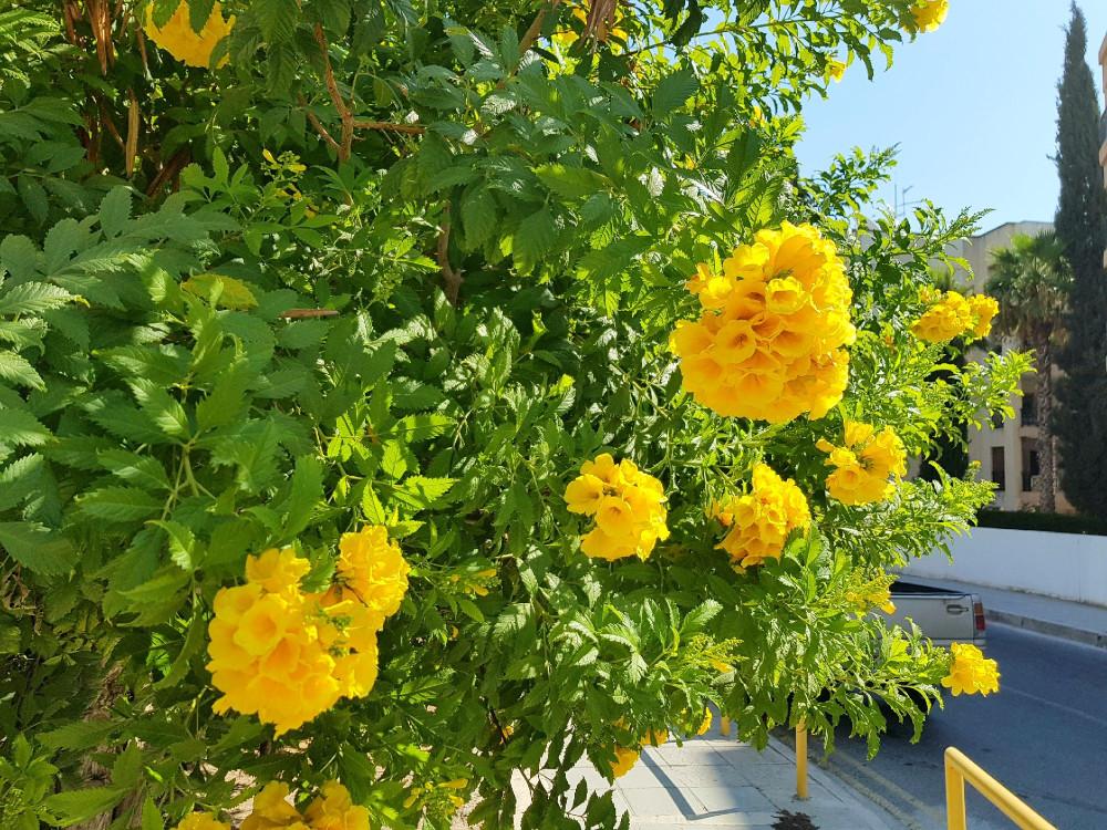 Зимой и летом одним цветом