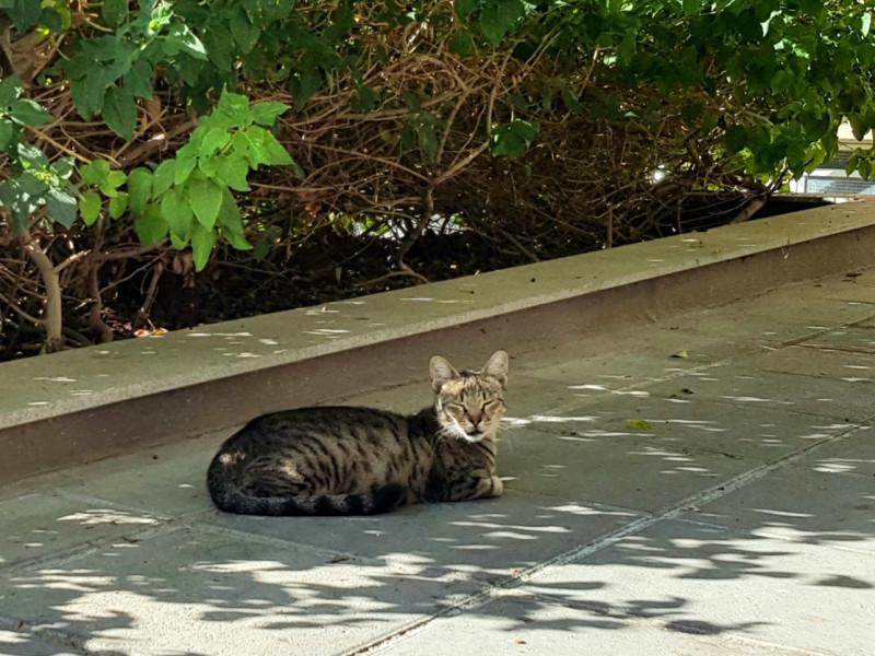 Осенние антистрессовые котики