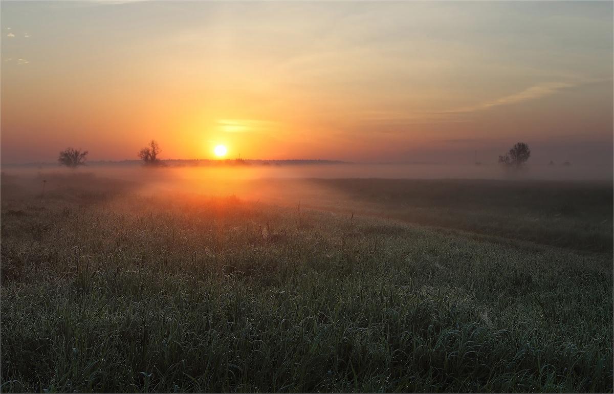 Ранее утро в поле