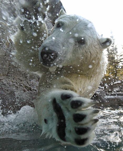 медведь_10
