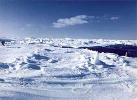 arctic-vid