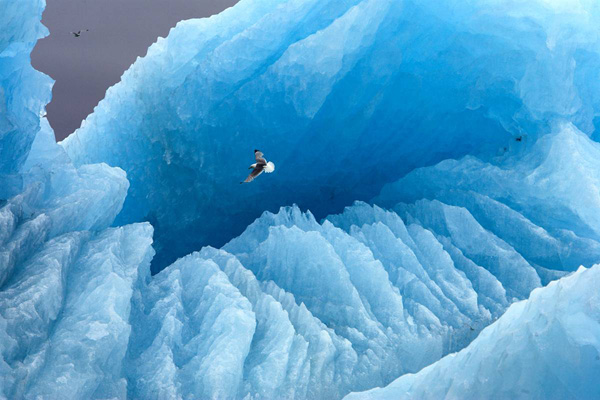 Арктика полет