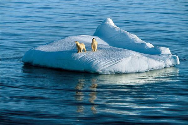 Арктика медведи