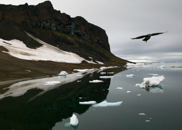 Арктика природа_2