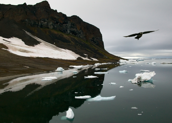 Арктика_1