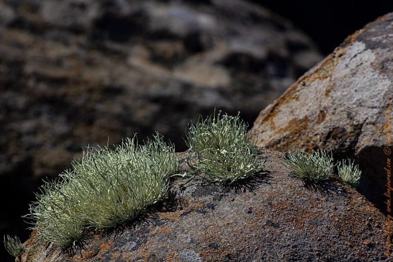 """Мхи на камнях похожи на высшие растения. Сейчас они иссохшие, но пройдёт дождик, и живописно """"расцветут""""."""