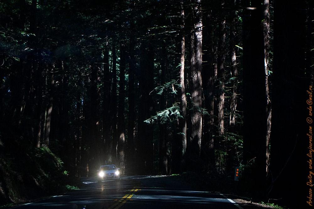 Вот это да!!! Днем в редвуд-лесу... Дорога 128. Хенди Вудс SP (Hendy Woods State Park)
