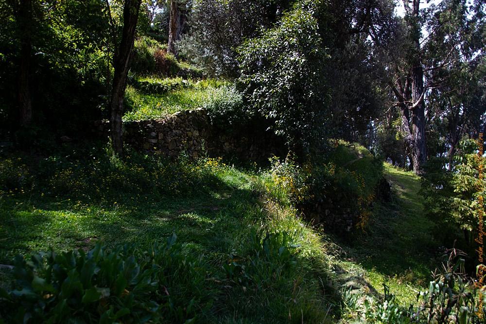 Старые террасы, ведущие к монастырю. А усыпальницы выше по лесннице, над источником