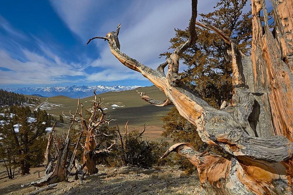 Основная дорога в Ancient Bristlecone Pine forest. На горизонте заснеженные вершины Высокой Сьерры, апрель!