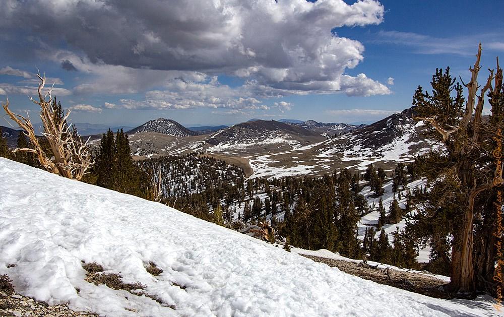 Весна в Белых горах не бывает ни ранняя, ни поздняя. Снег сошёл - всё, жара.