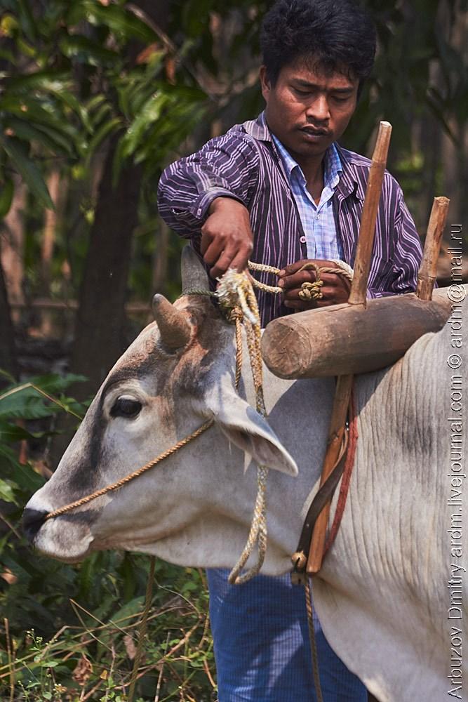 В Бирме множество приятных, жизненных моментов. Только успевай глазеть по сторонам