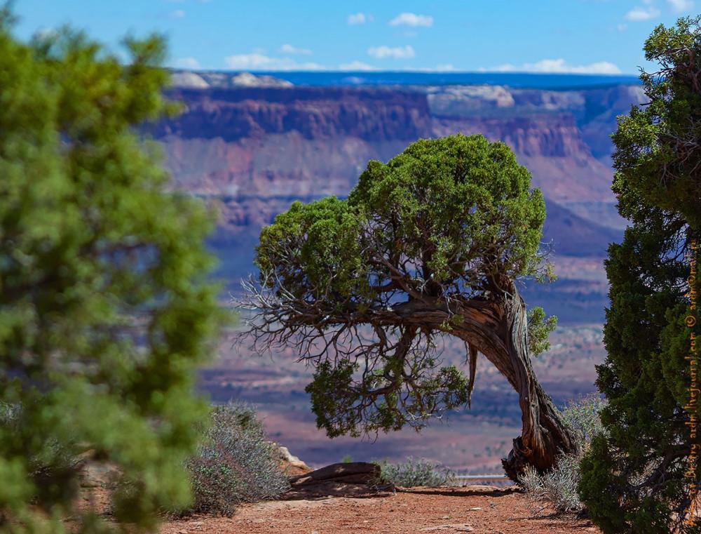 Южная часть Canyonlands NP предстала во всей красе