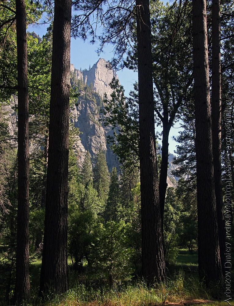 Долина Йосемити - типичная картина Сьерра-Невады. Вершины вырастают прямо из леса