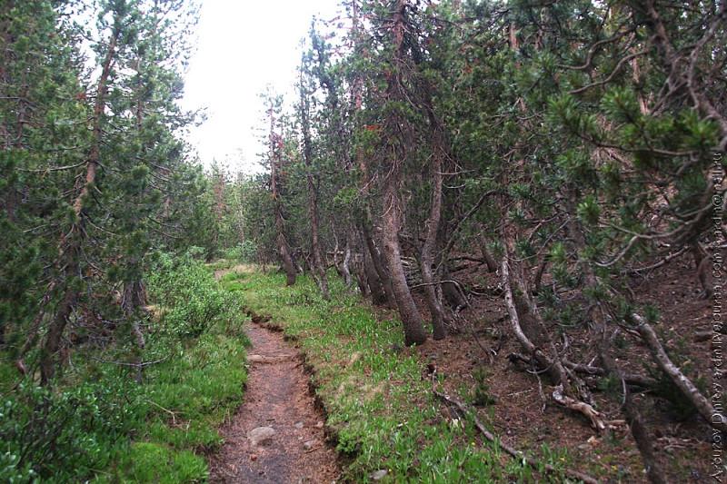 Лес на шлаковых полях - дорога на Deer creek