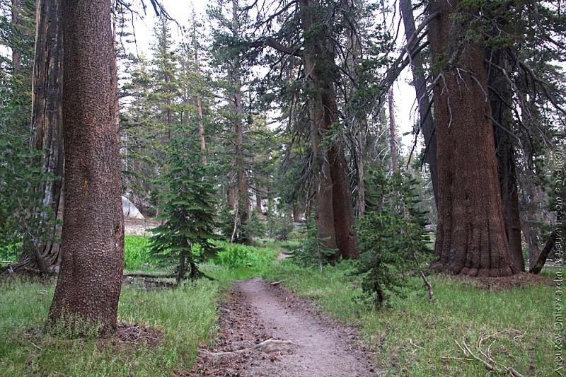 Лес в районе Deer creek