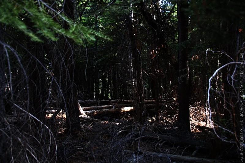 По тенистому участку долины Mono creek