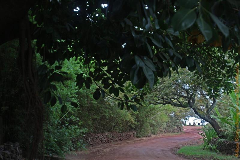 Похоже, эта дорога на Tahai  одна из древнейших на острове. Ока красная. Как цвет Прародины, куда древние отправляли умерших, выкрашивая тех и сами погребения красной охрой.