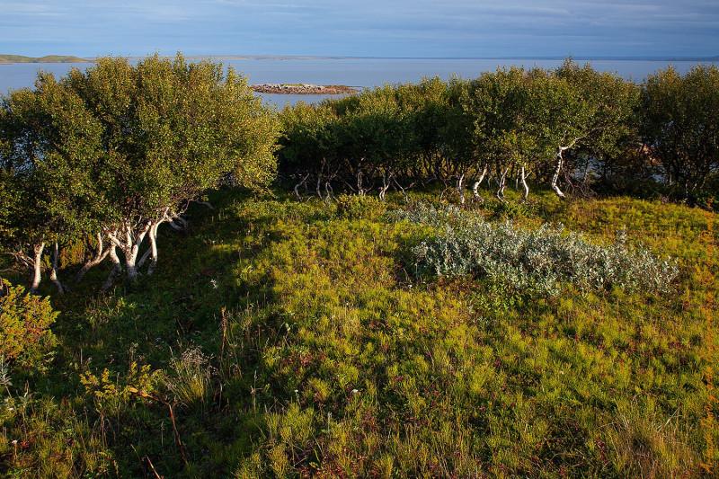 Вид с лесистого берега на Лумбовский залив