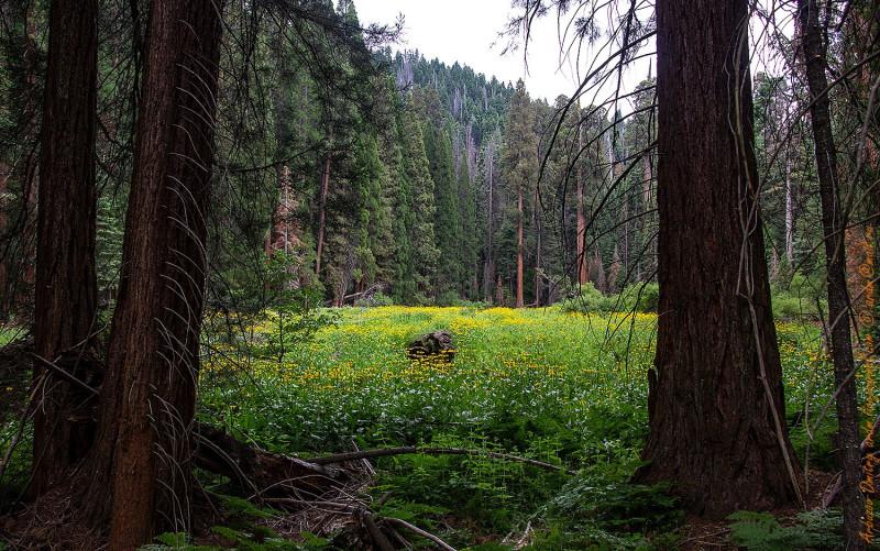 Путь к Redwood meadow