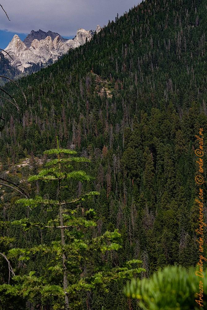 Путь к Redwood meadow (справа) и горы, откуда идет High Sierra Trail