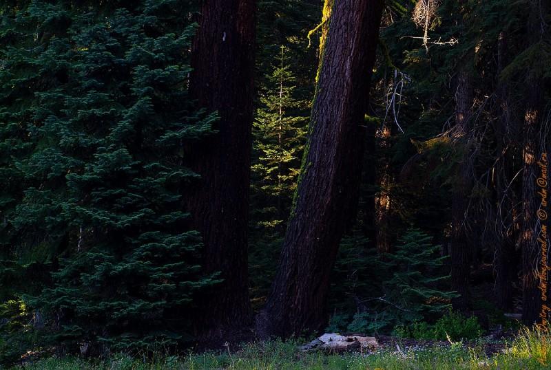 Закат в Калифорнийской тайге