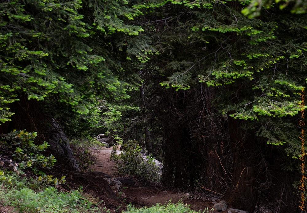 Тропа Paradise trail