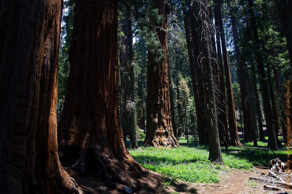 Тропа по древнему лесу