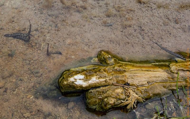 Такие вот зверушки живут в тепленьких местах Чойгана и летом, и зимой