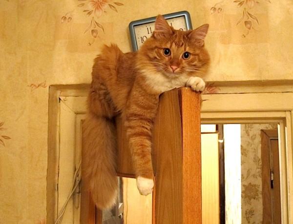 Пропал кот москва рыжий