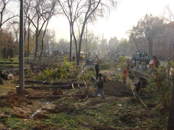 Вырубка. 2009 г.
