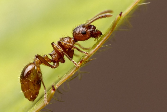 ants_and_mirror_2_703