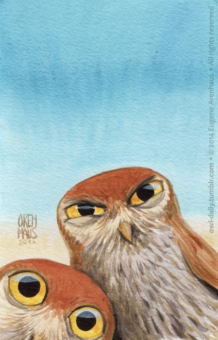 owl-daily-eugene-arenhaus-00045