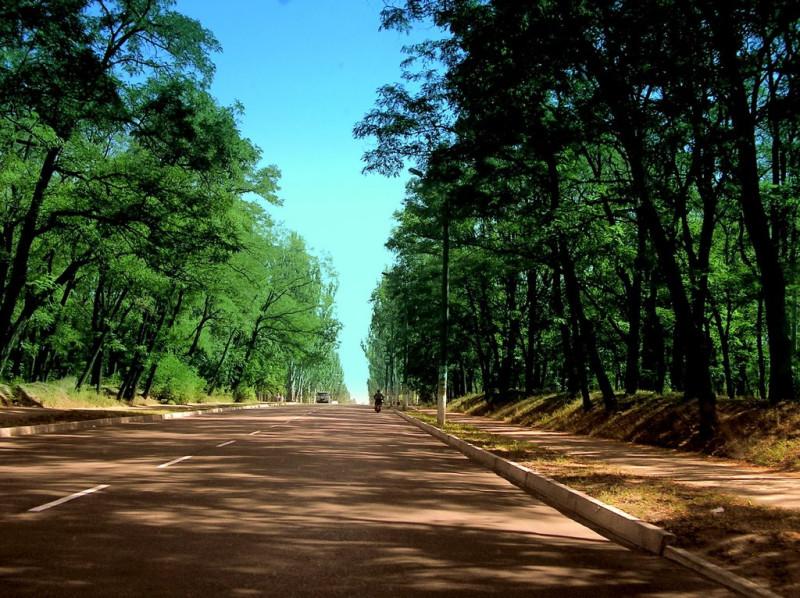 Это не лесная дорога, а улица Ленина, проходящая через городской парк. Весной эти старые акации покрываются белой пеной цветов и заполняют воздух упоительным ароматом (фото с сайта mapio.net)