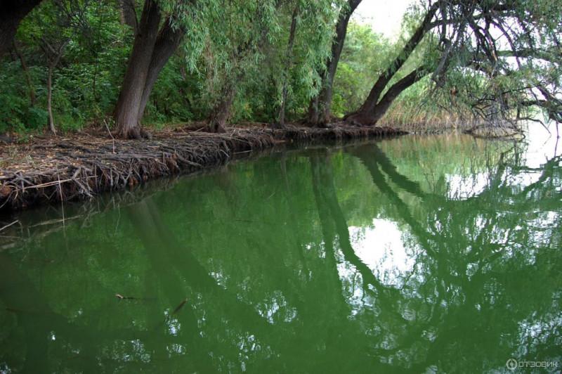 А вот и наши джунгли в «большую» воду. Правда похоже на Амазонку? Фото с сайта otzovik.com
