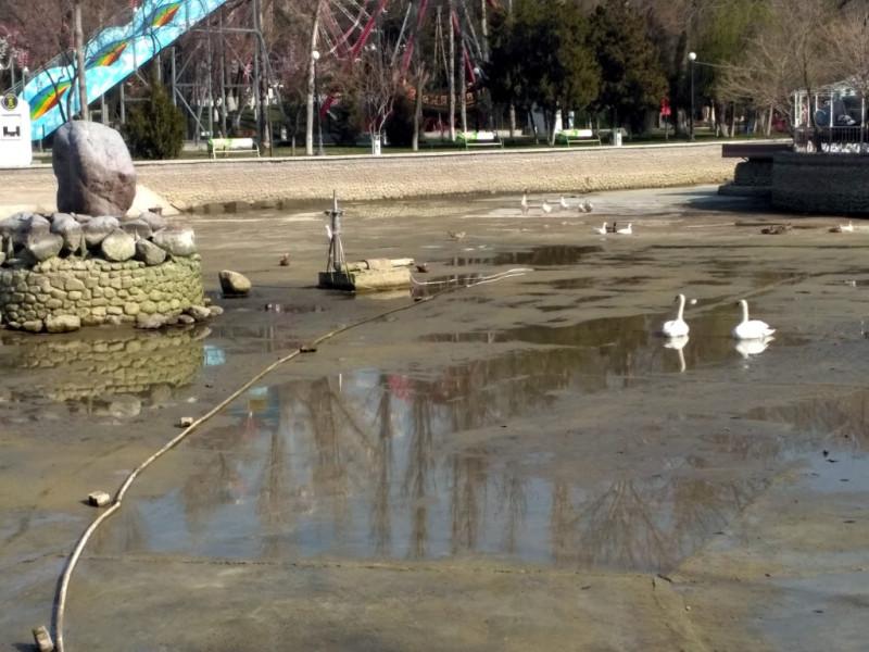 Ну и конечно, очень мешают по-мартовски пустые пруды и молчащие фонтаны. Вот даже лебеди вынуждены ждать большой воды в неподобающей их царственному величию мелкой луже...