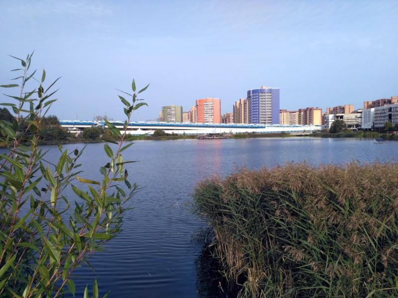 Вид на кварталы Черной речки из Семейного парка
