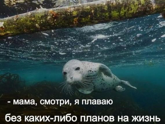 1415404404_1415182445_podborka_26
