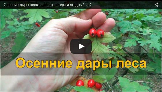 Осенние дары леса VIDEO