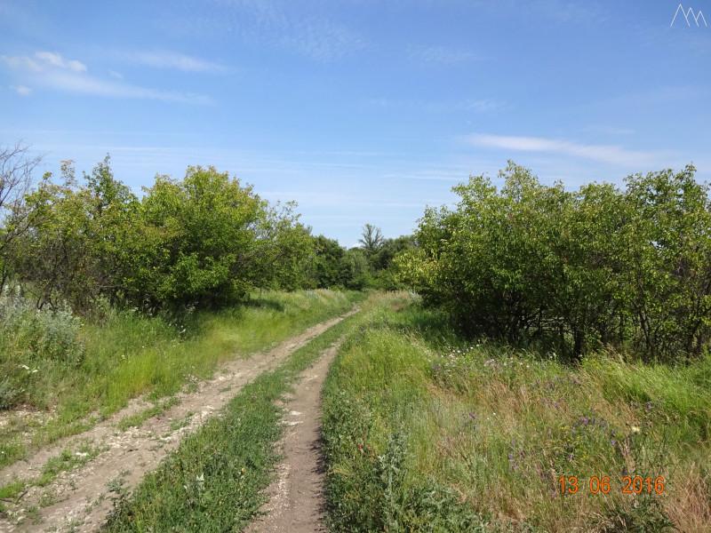 Дорога в степь