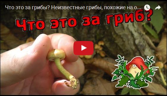 Что это за гриб VIDEO