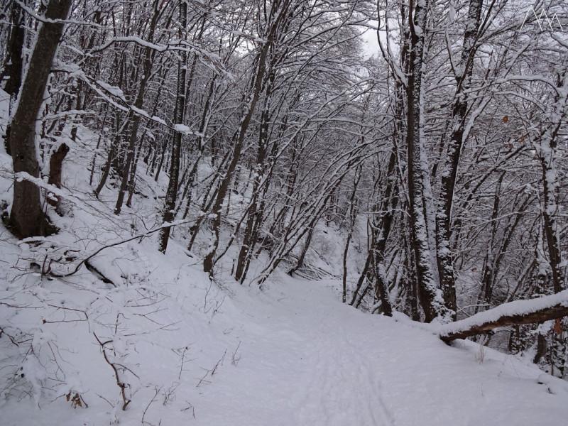 Спуск по зимнему лесу