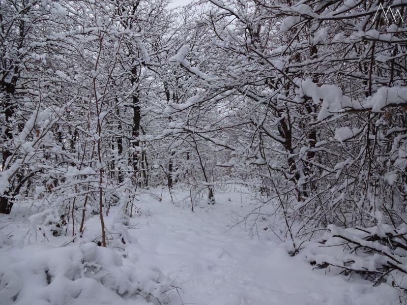 Зимний январский лес