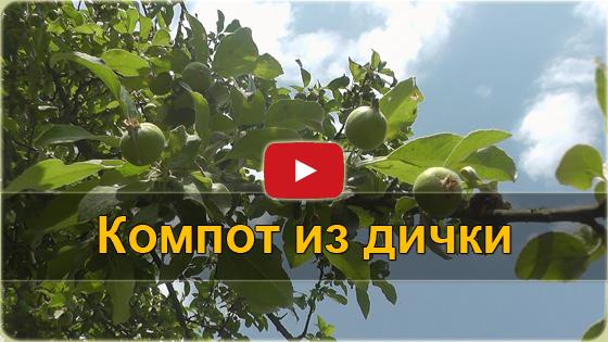 Компот из диких яблок VIDEO