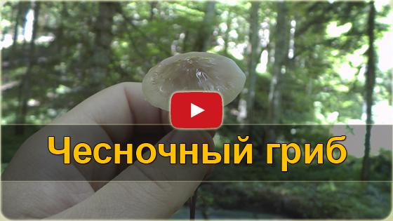 Чесночный гриб VIDEO