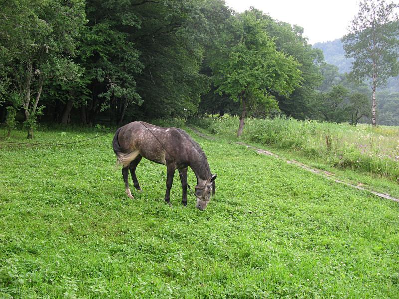 Поселок Гузерипль, лошадь